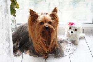 תספורות לכלבים, גם לכלב שלך מגיע להיות מטופח